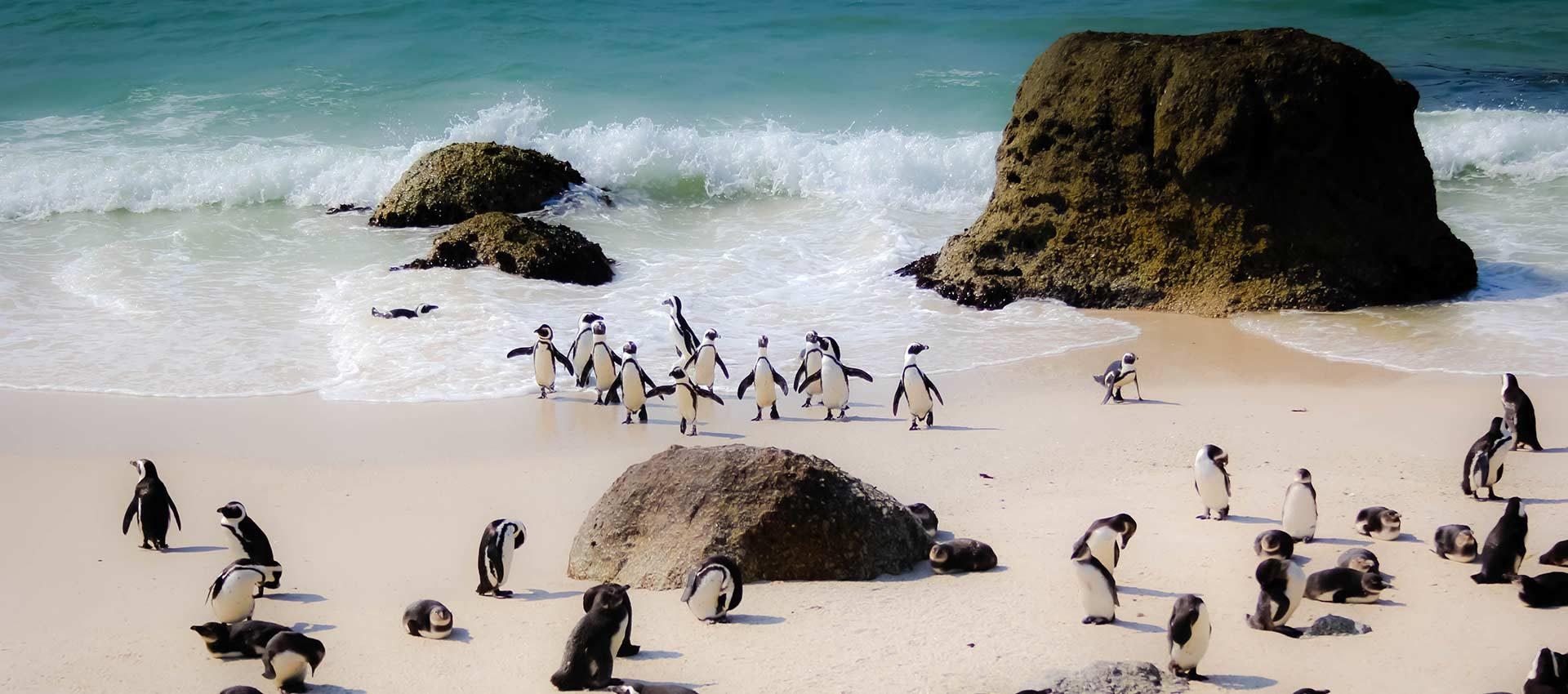 פינגווינים